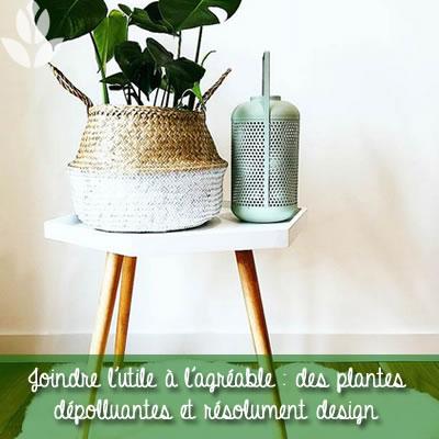 plantes dépolluantes design