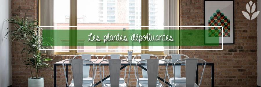 les plantes dépolluantes pour l'intérieur