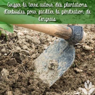 griffer la terre autour des plantations