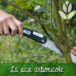 scie arboricole