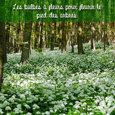 fleurir le pied des arbres
