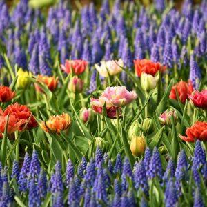 focus sur les bulbes à fleurs