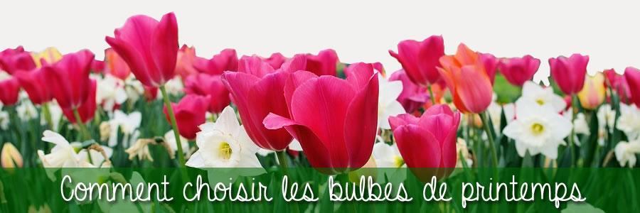 comment choisir les bulbes de printemps