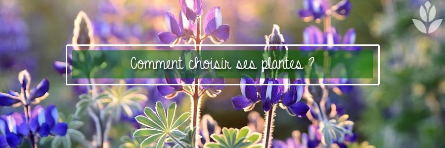 comment choisir ses plantes
