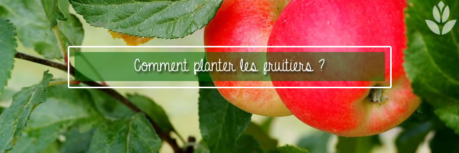 comment planter les fruitiers
