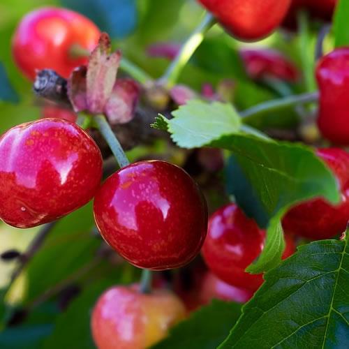 fruitiers entretiens