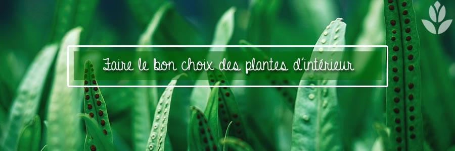 faire le bon choix des plantes d'intérieur
