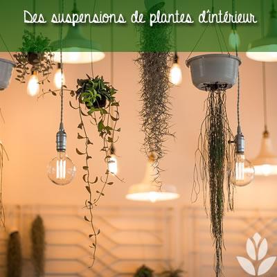des suspensions de plantes d'intérieur