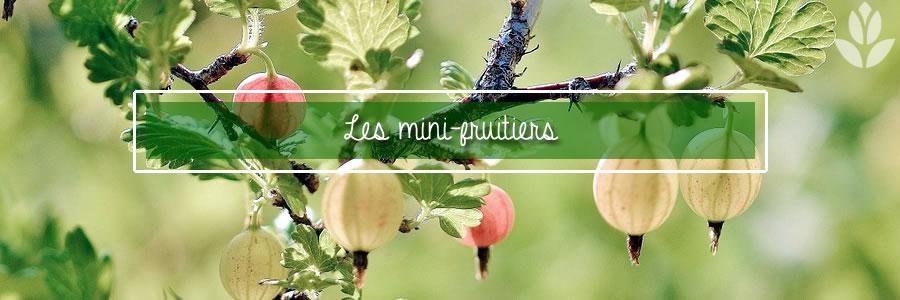 les mini fruiteres