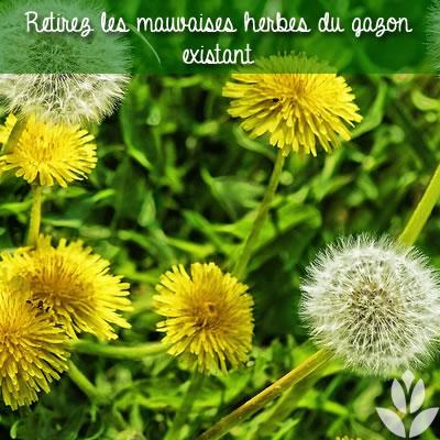 Retirez les mauvaises herbes du gazon