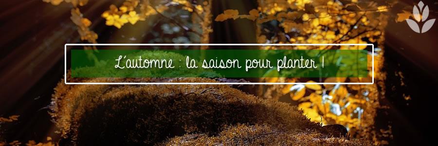 automne - la saison pour planter