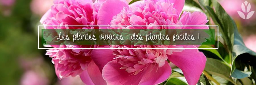 des plantes faciles