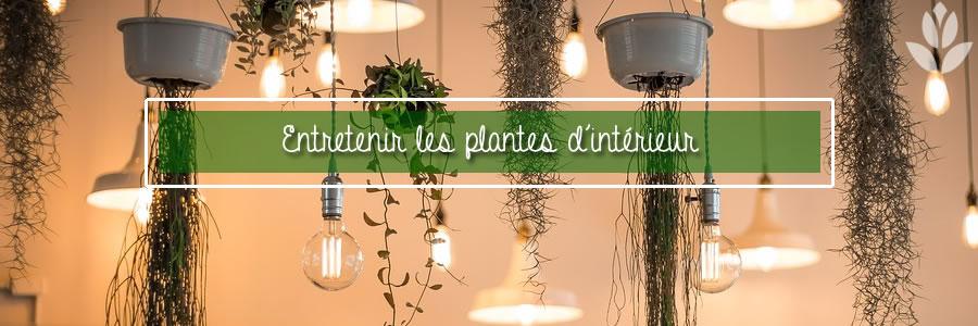 comment entretenir les plantes d'intérieur