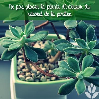 plante rebord fenêtre