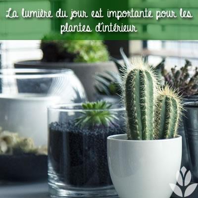 lumière du jour pour les plantes