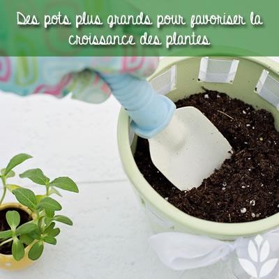 des pots plus grands pour les plantes d'intérieur