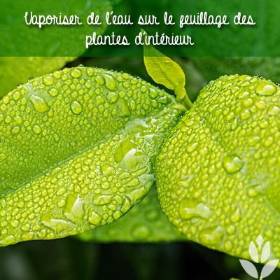 vaporiser de l'eau sur les feuilles