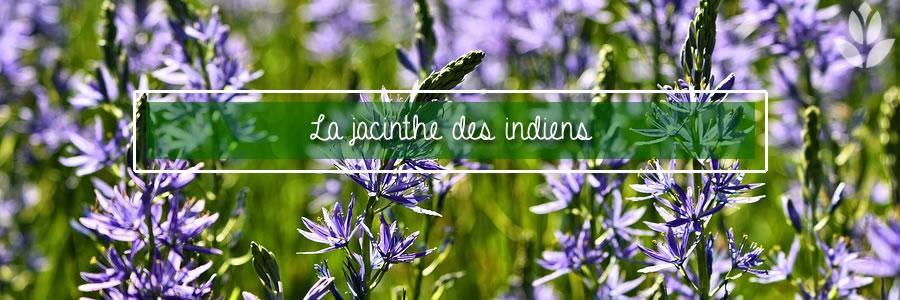 jacinthe des indiens