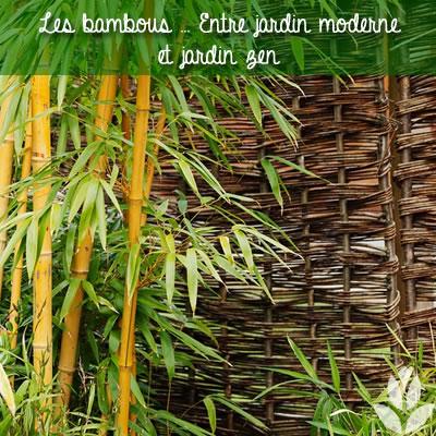 bambou moderne et zen