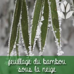 gel bambou