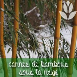 jardin enneigé avec des bambous