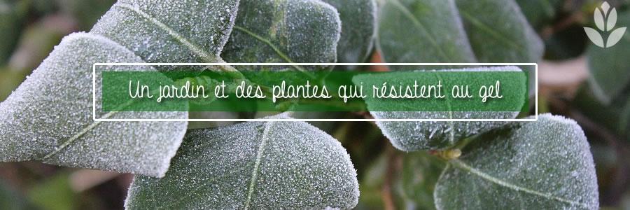 des plantes qui résistent au gel