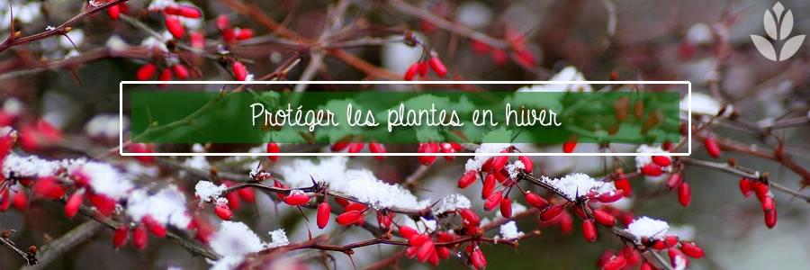 protéger les plantes en hiver