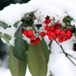 hiverner les plantes à la saison froide