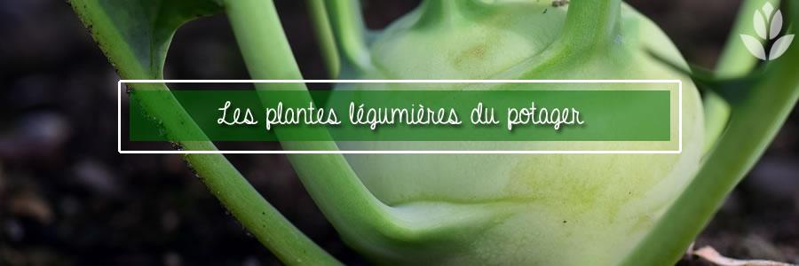 plantes légumières du potager