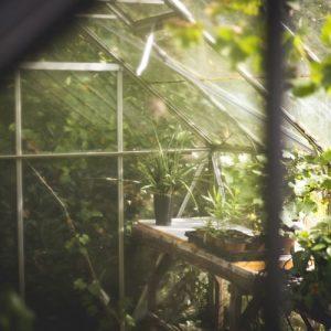 les plantes à l'abri d'une serre