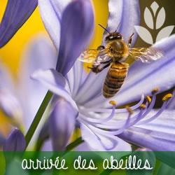 arrivée des abeilles au printemps