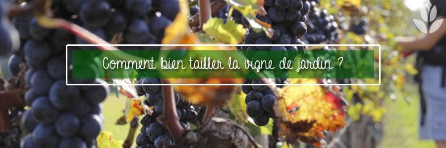 comment bien tailler la vigne de jardin