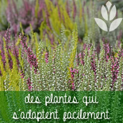 des plantes qui s'adaptent facilement