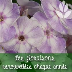 des floraisons renouvellées chaque année