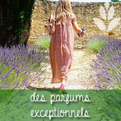 parfums des plantes vivaces