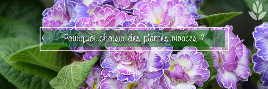 pourquoi choisir des plantes vivaces