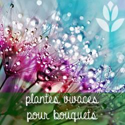plantes vivaces pour bouquets