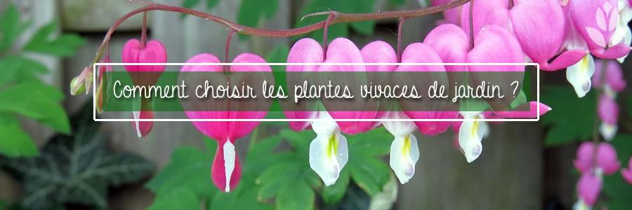 choisir ses plantes vivaces
