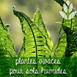 plantes vivaces pour sol humide
