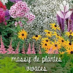 plantes vivaces pour massifs