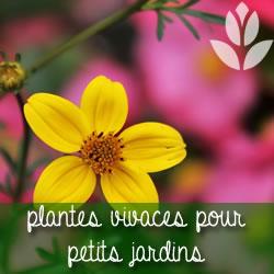 plantes vivaces pour petits jardins