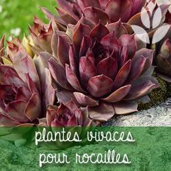 plantes vivaces pour rocailles