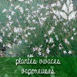 plantes vivaces vaporeuses