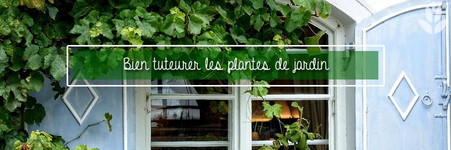 bein tuteurer les plantes de jardin