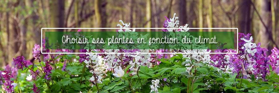 choisir ses plantes en fonction du climat