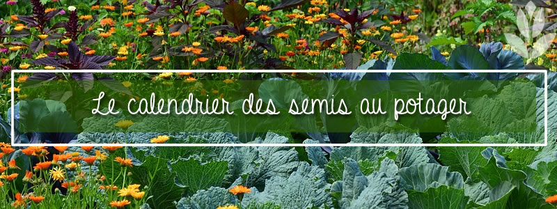 Calendrier Plantations Potager.Calendrier Des Semis Et Plantations Des Graines Du Potager