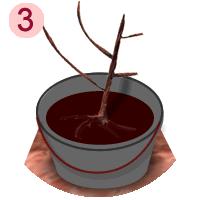 pralinage des racines des fruitiers