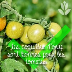 coquilles d'oeuf bonnes pour les tomates