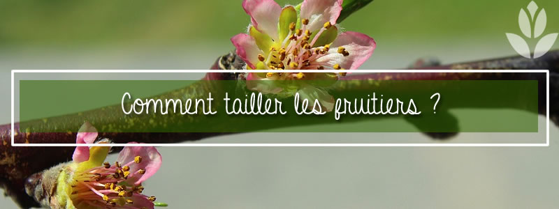 comment tailler les fruitiers