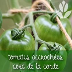 tomates et cordes